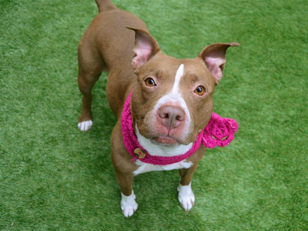Manhattan Animal Care Center I need a home!!! York dog