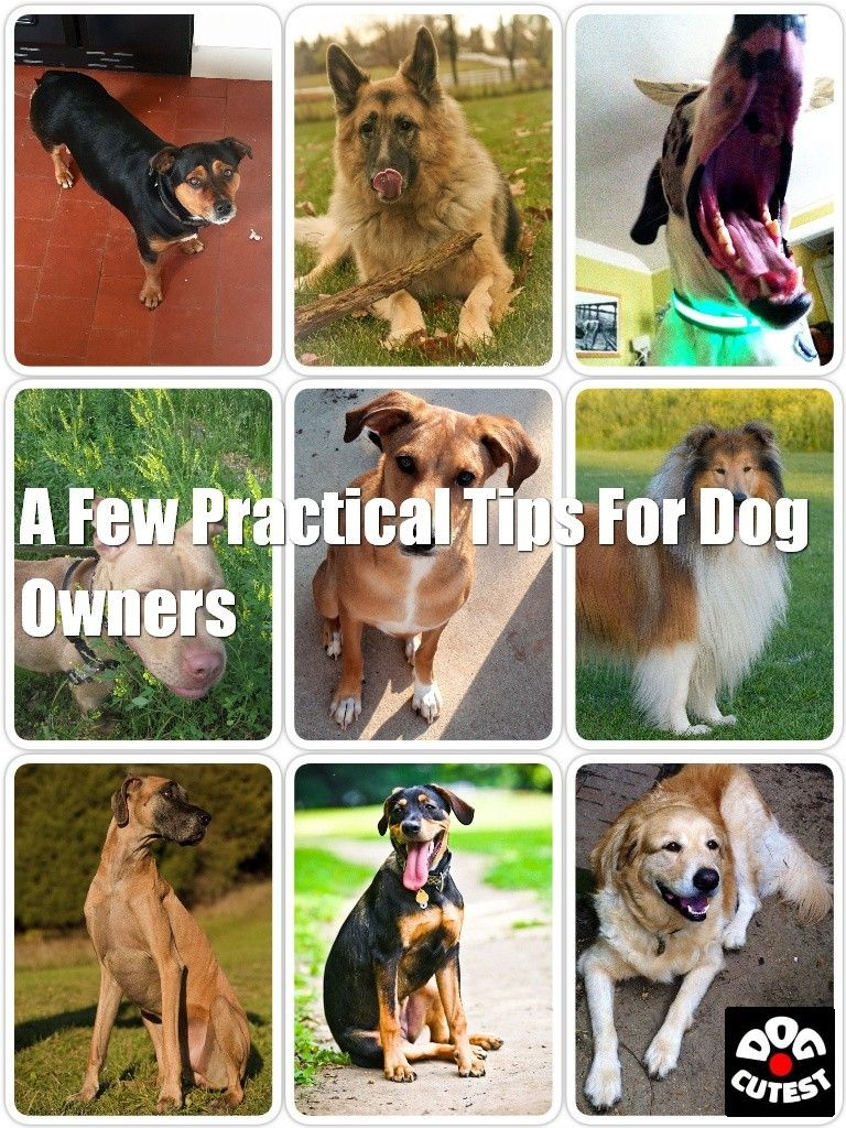 Do You Own A Dog Read These Tips In 2020 Dogs Pet Dogs Sick Dog