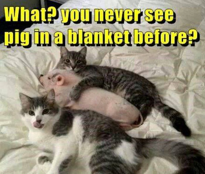 The 20 Creepiest Things You Can Whisper When Giving A Hug Cute Animals Funny Animal Pictures Animals Friendship