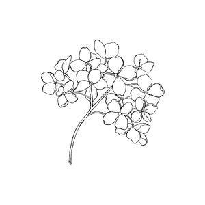 Black And White Hydrangea Clipart Clip Art Library Hydrangea Tattoo Body Art Tattoos Flower Tattoos