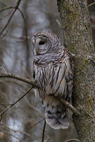 Four Owl Friends #1