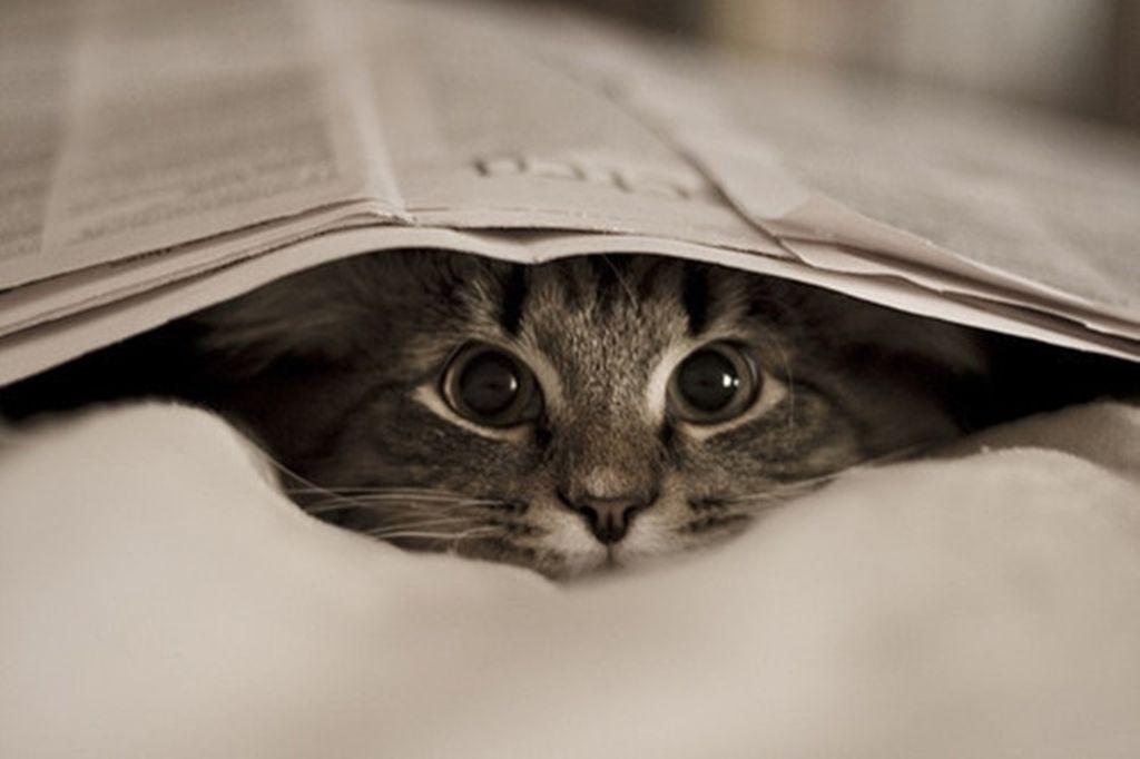Resultado de imagen para gato escondido