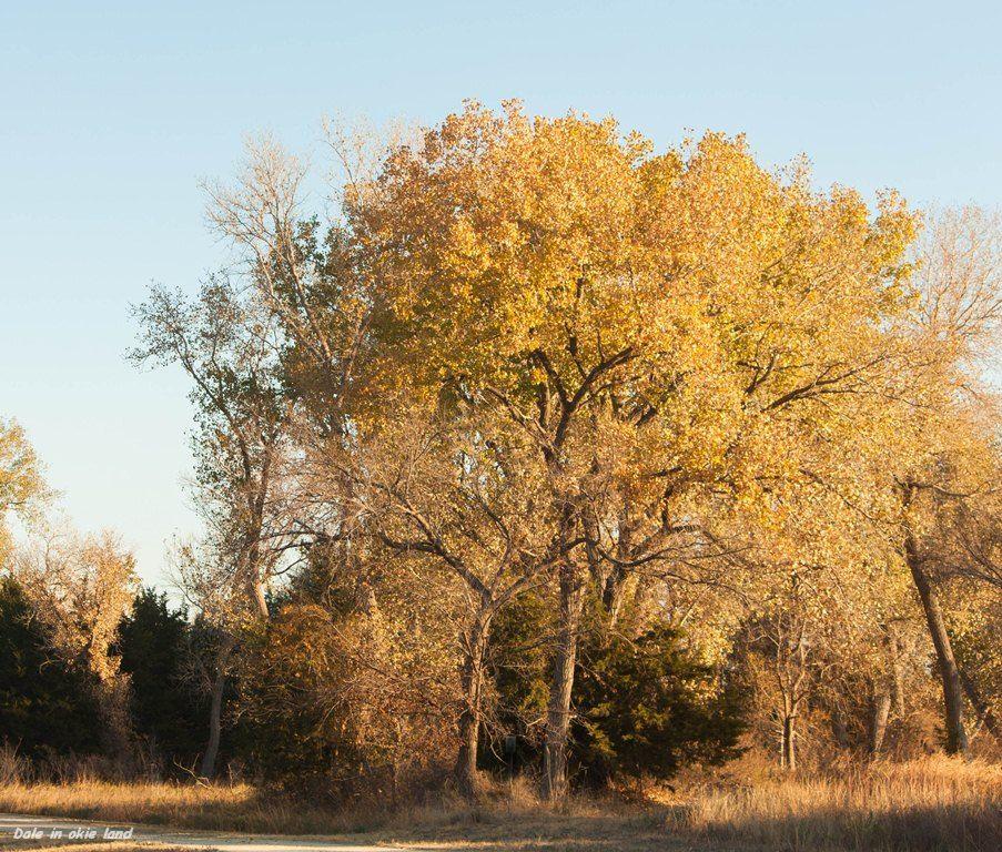 Grand Salt Plains State Park  North Center, Okla. 2012/10/31