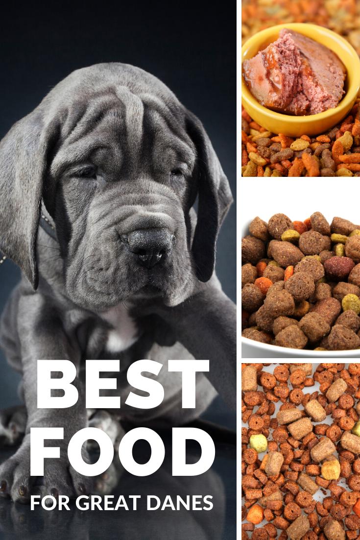 The Best Dog Food For Great Danes Best Dog Food Dog Food Recipes Great Dane