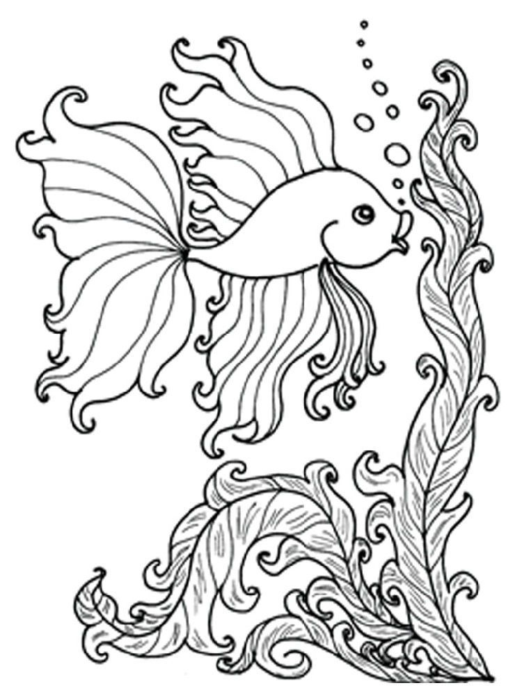 Fish Color Page To Print Fish coloring page, Animal