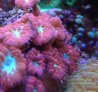 Bunte Korallenableger Korallen Anemonen Krusten auch f