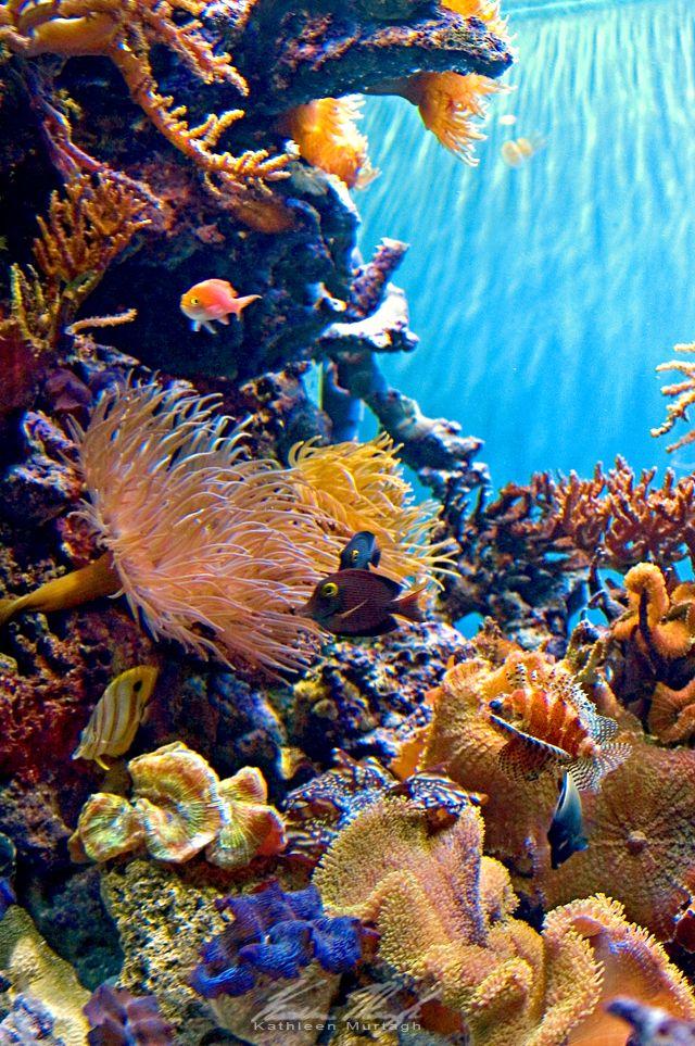 Plants in a Coral Reef | Sciencing |Ocean Life Plant Caribbean