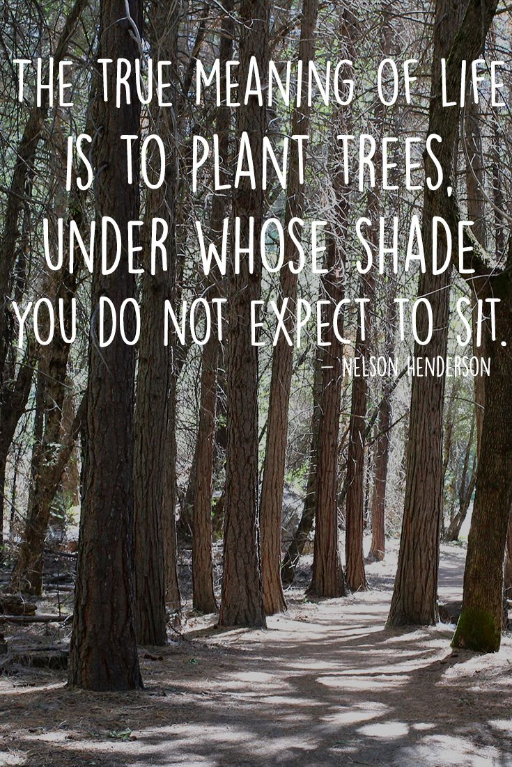 """""""The true meaning of life is to plant trees, under whose"""