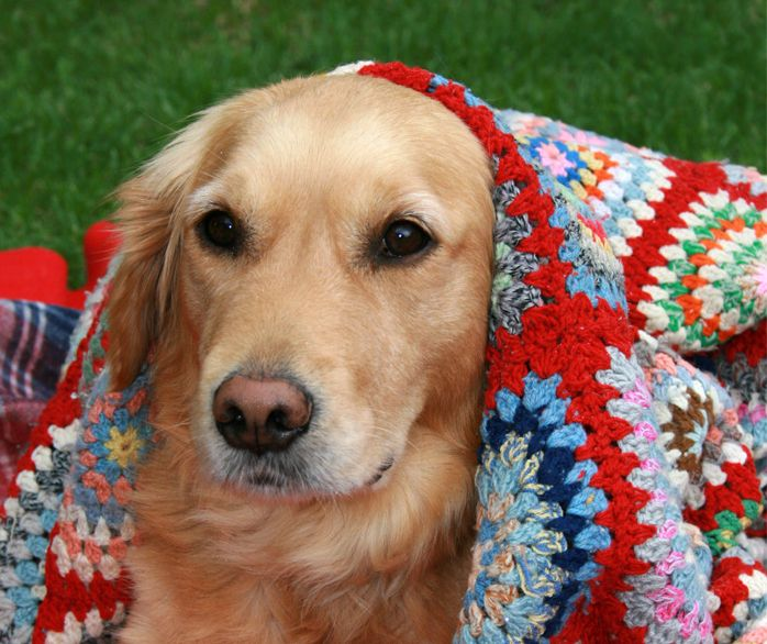 10 ways to keep your dog warm in cold weather networx animals rh pinterest co uk