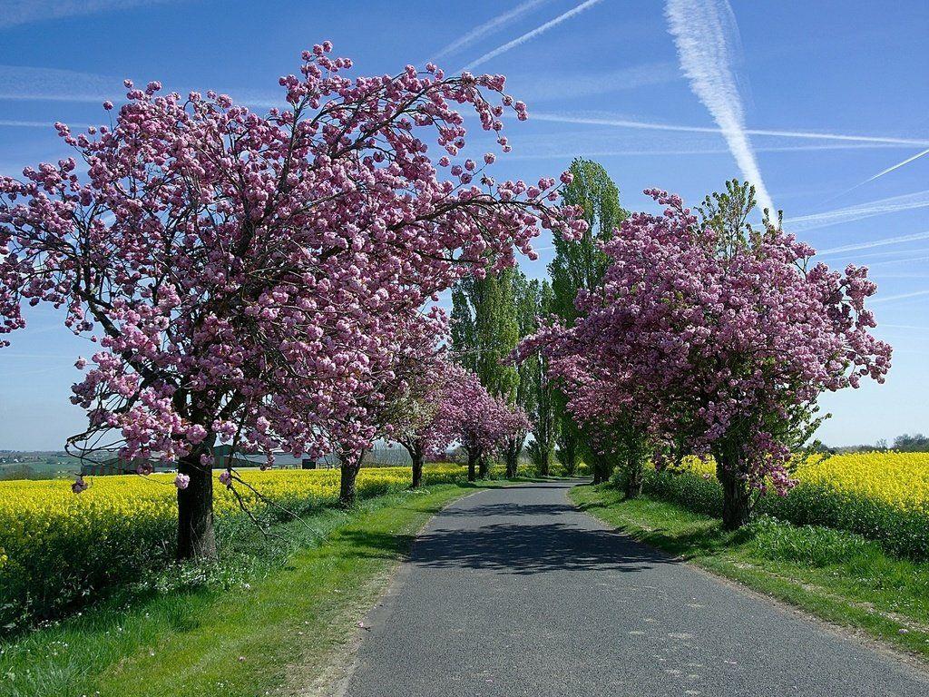 простой фото цветущая весна весенние пейзажи подобранная актриса