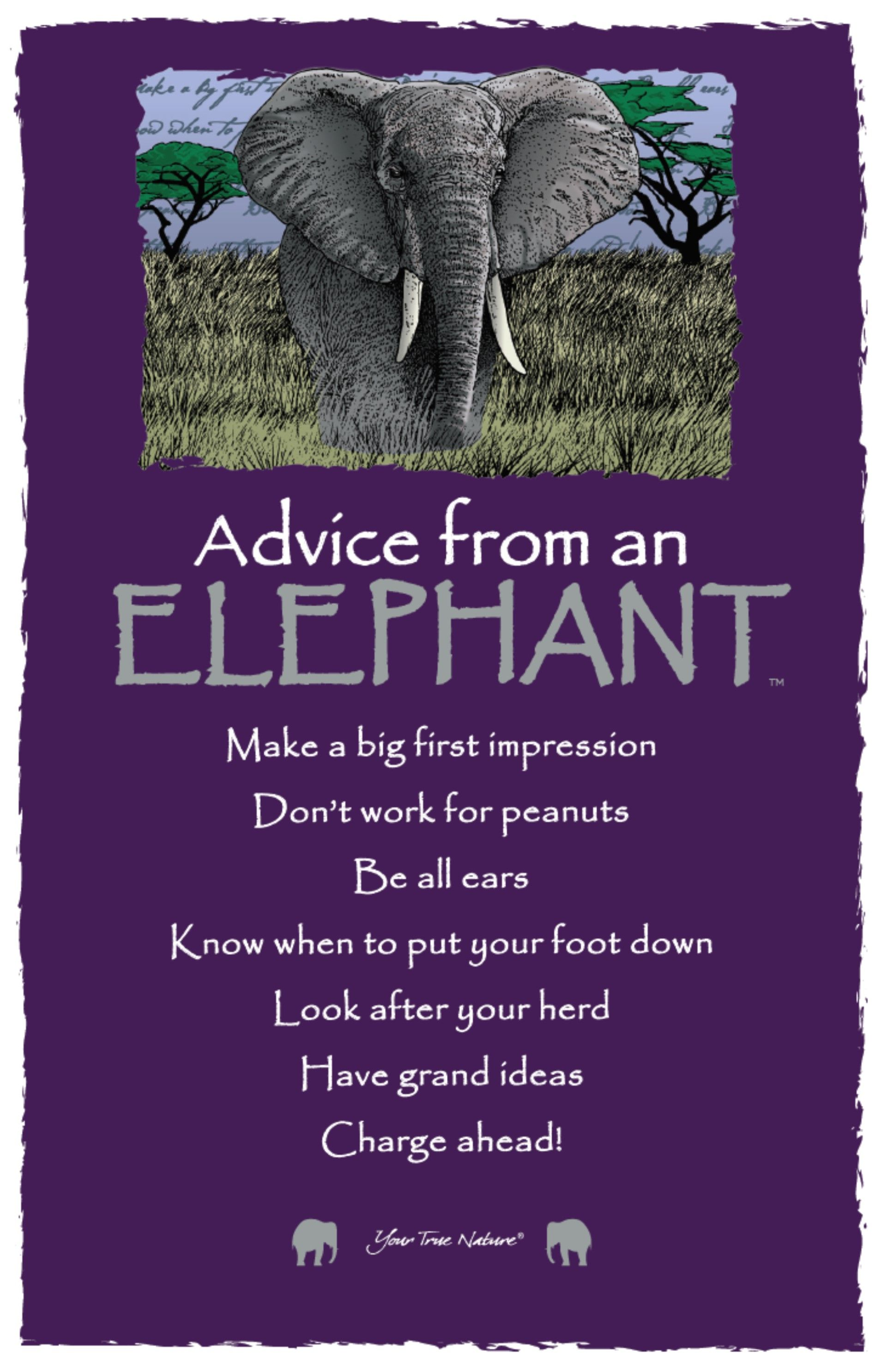 Charge Ahead Advice From An Elephant Wildlife Elephant Quotes