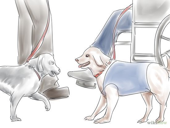 Train Your Service Dog Without A Professional Trainer Easiest