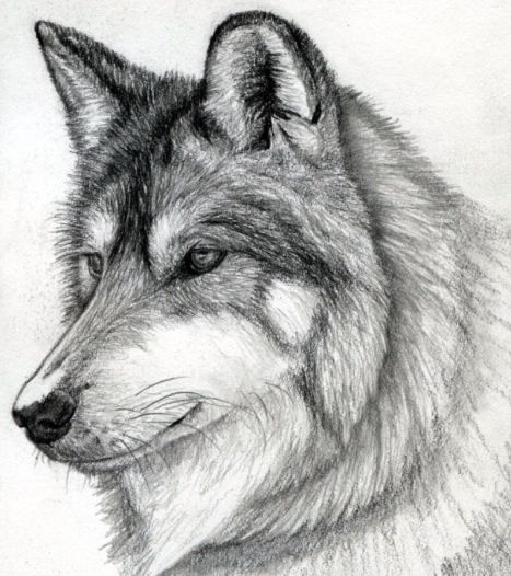 Dibujos De Lobos 2 Lobos