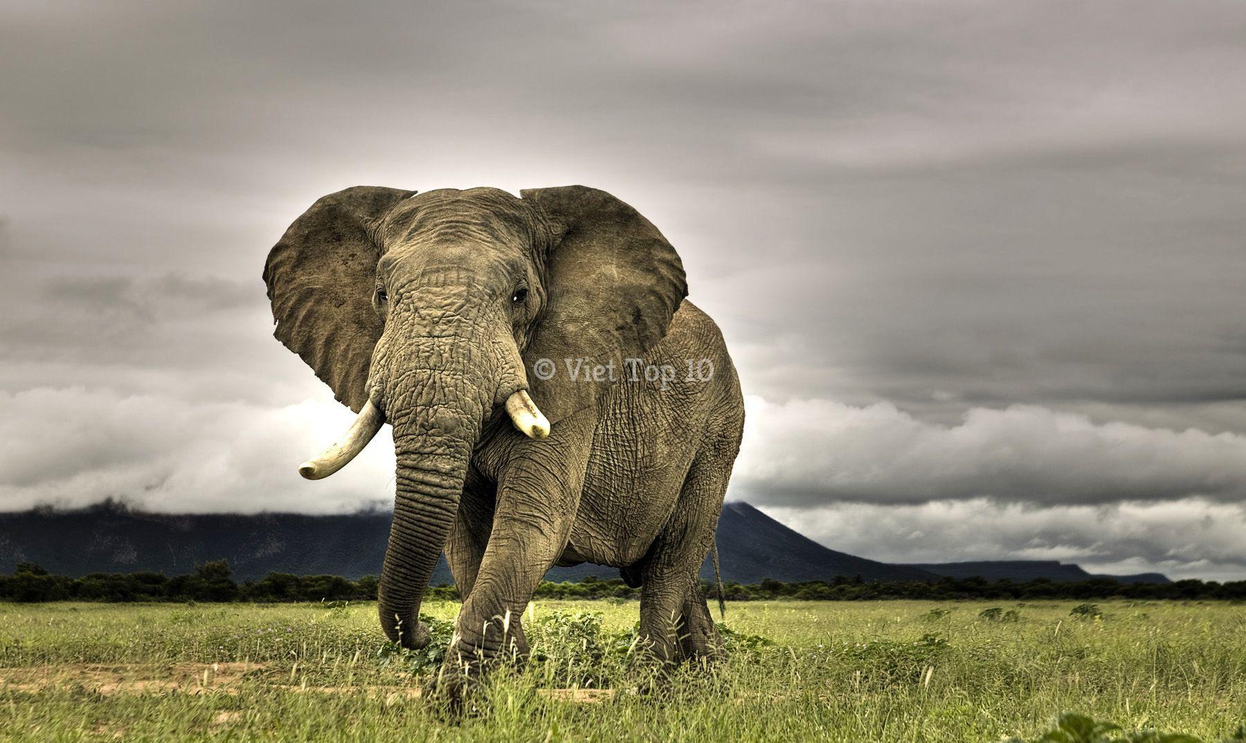 loài động vật giết người nhiều nhất thế giới, việt top 10, viet top 10, top 10, viettop10.net, top x