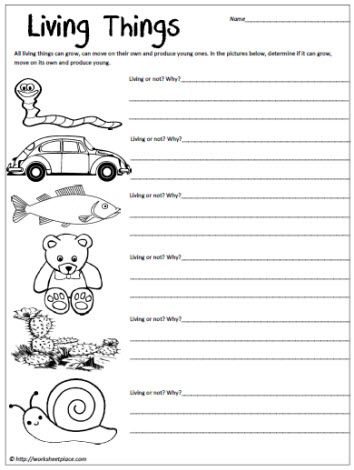 Living Things Worksheet Science worksheets, 1st grade