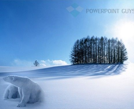 Polar Bear Powerpoint Template  Animal Powerpoint Template