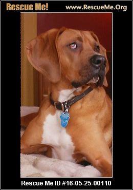 Rhodesian Ridgeback Rescue Ohio Rhodesian Ridgeback Dog