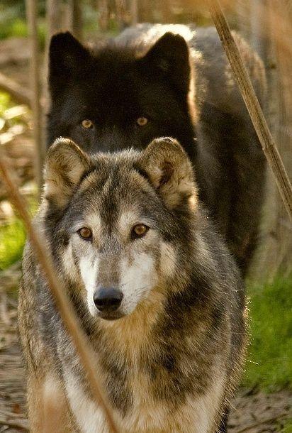 """wolfeverything: """"Amazing animals ❤️ """""""