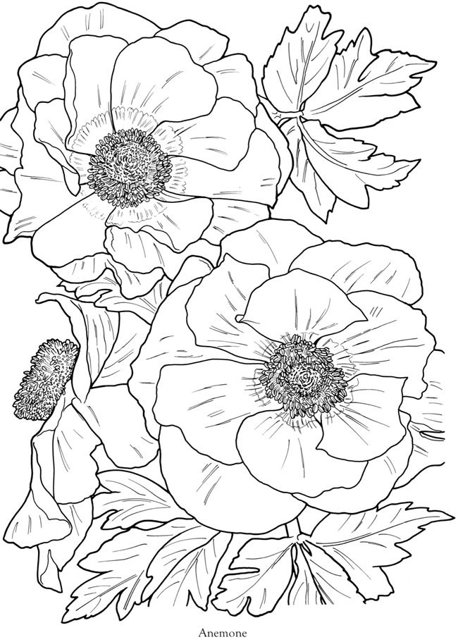 from In Full Bloom: A Close-Up Coloring Book by Dove (free ...