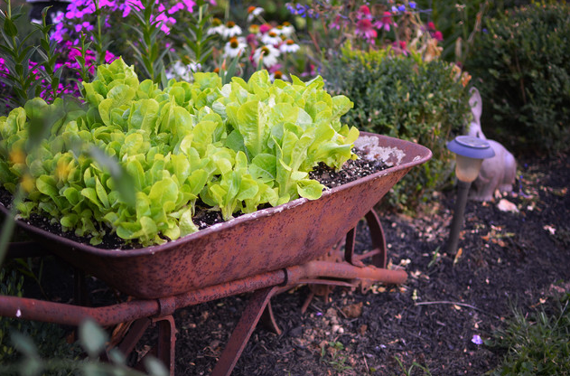 I only thought to plant flowers in my antique wheelbarrow. This ...
