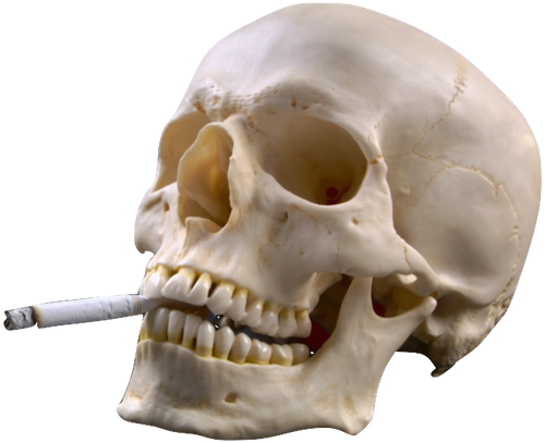 Transparents Skull Png Aesthetic