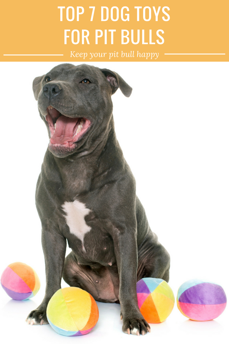Does your pit bull destroy his stuffed toys? Understanding pit bull ... | Best Dog Toys For Pit Bulls