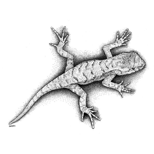 Lizard Animal Sketches Ink Pen Drawings Drawings