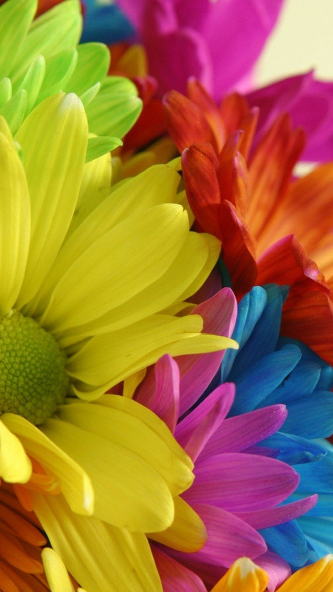 Sun Flower Colorfull Mobile Wallpaper Flower Phone Wallpaper Hd
