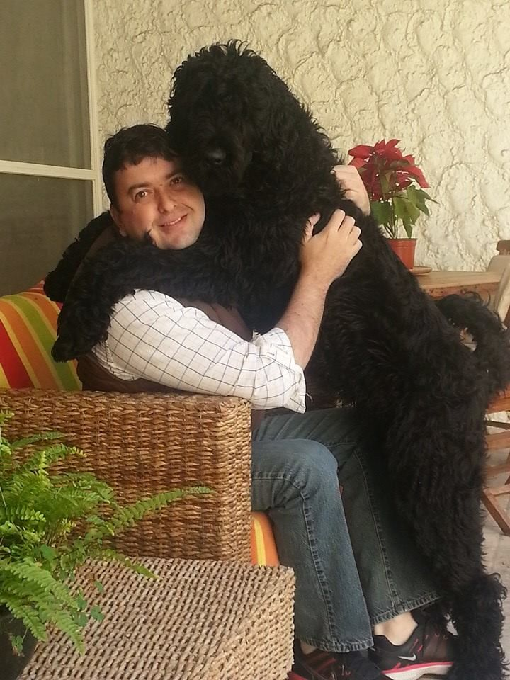 A Black Russian Terrier Hug