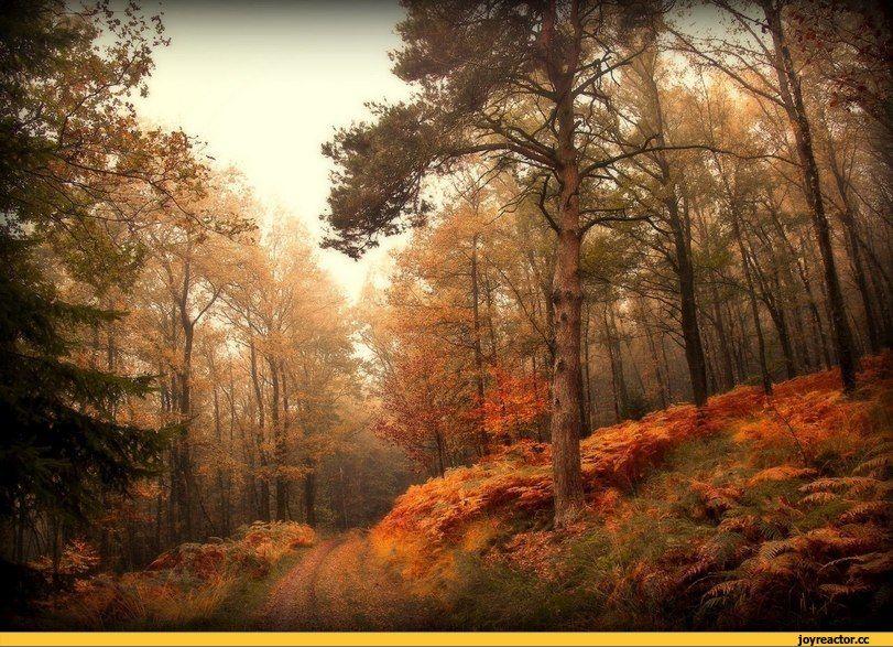 красивые картинки,лес,Природа,красивые фото природы: моря ...