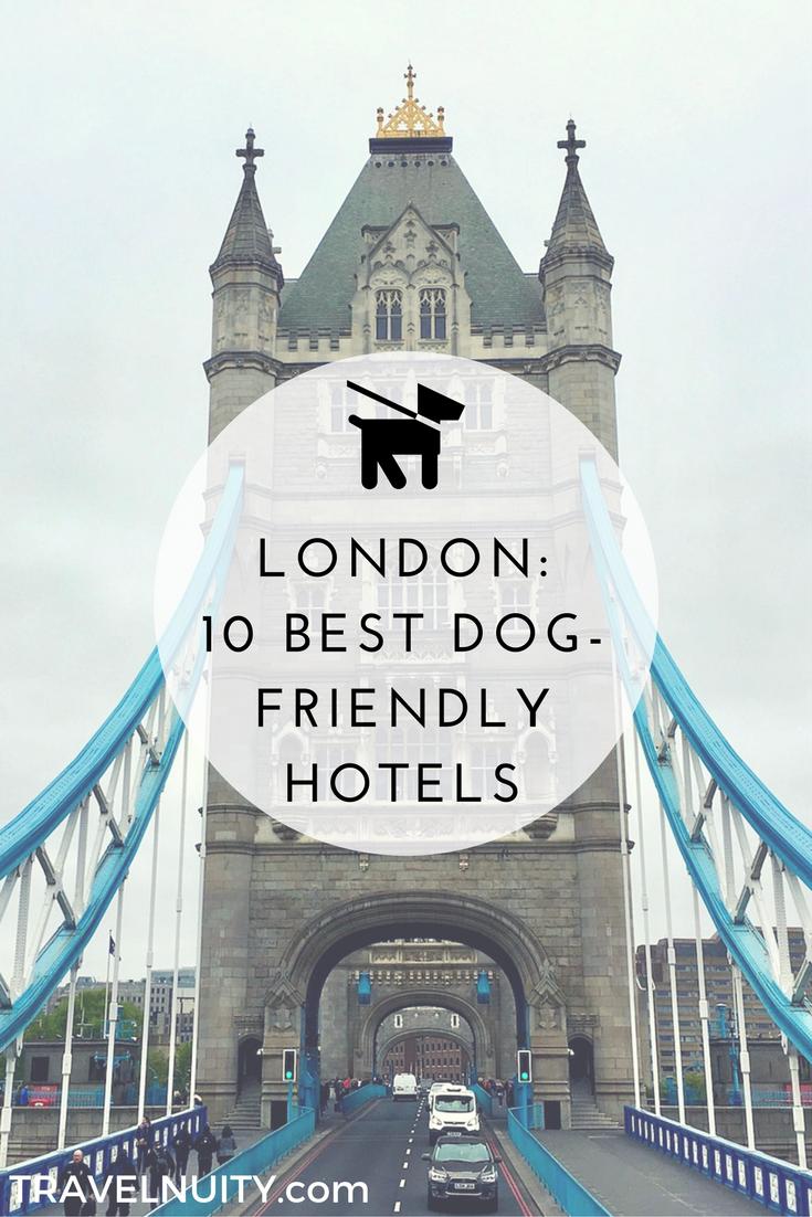 10 Best Dog Friendly Hotels In London Travel Animal Adventures