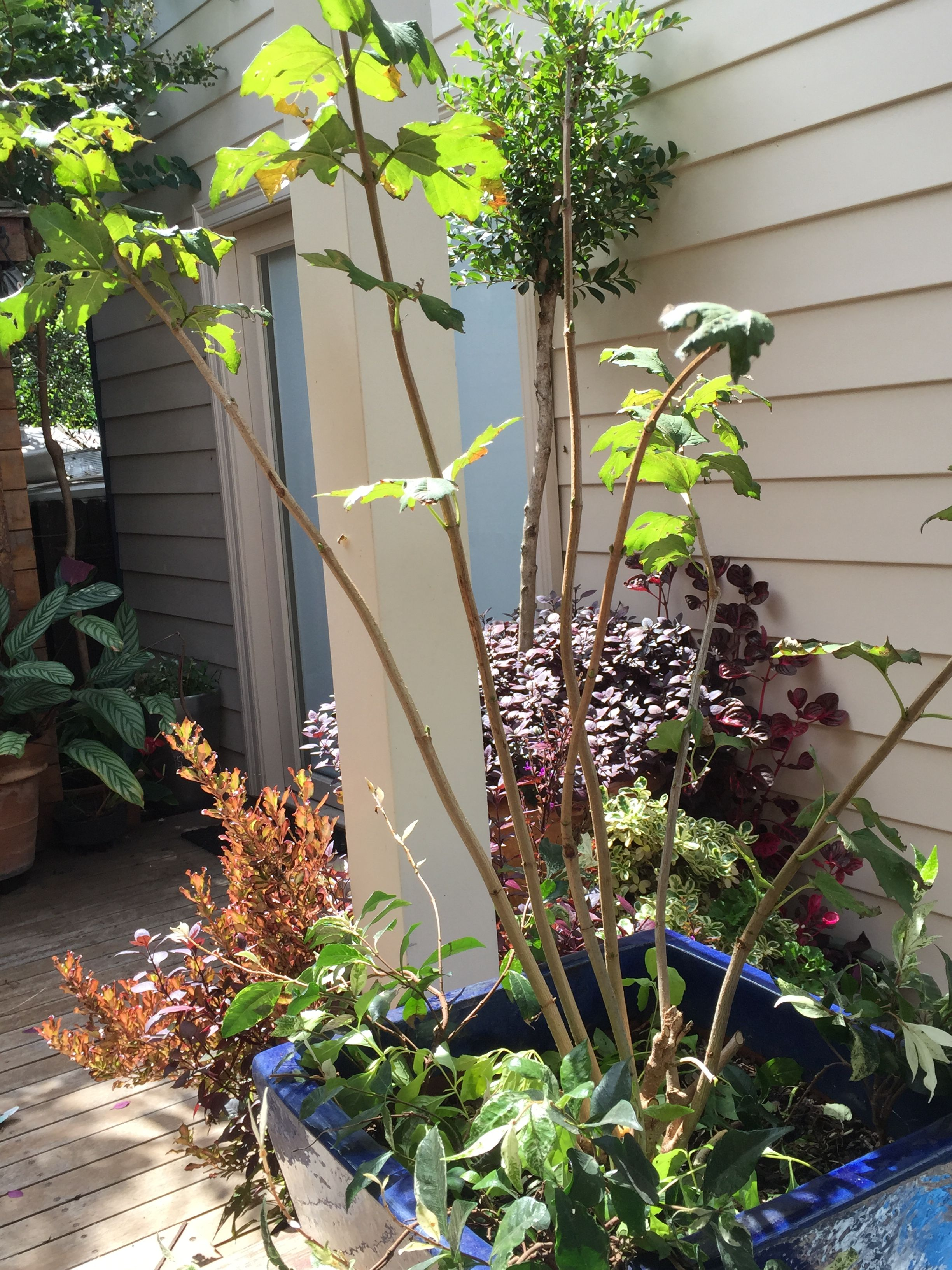 Pin by Bells Me on Small garden ideas #sydney | Small ...