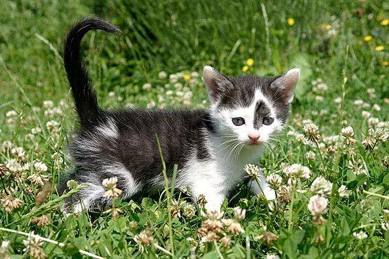 Kitten (mit Bildern) Katzenbabys, Katzen, Katzenrassen