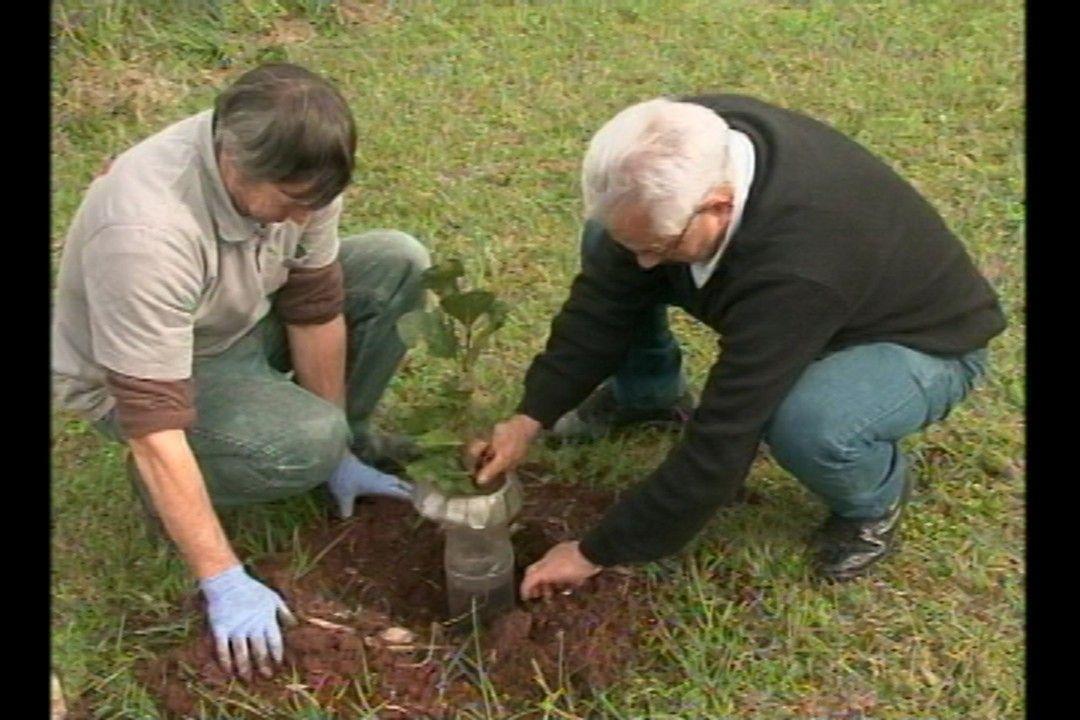 Na Universidade de Cruz Alta uma técnica simples mas muito eficiente tem protegido as plantas.