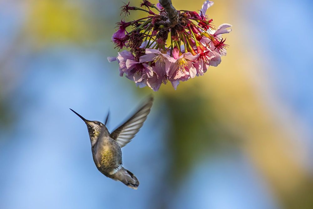 Only A Hummer Can Do It by H. Tongho on 500px