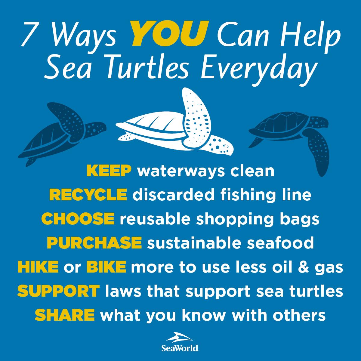 7 Ways You Can Help Sea Turtles Everyday