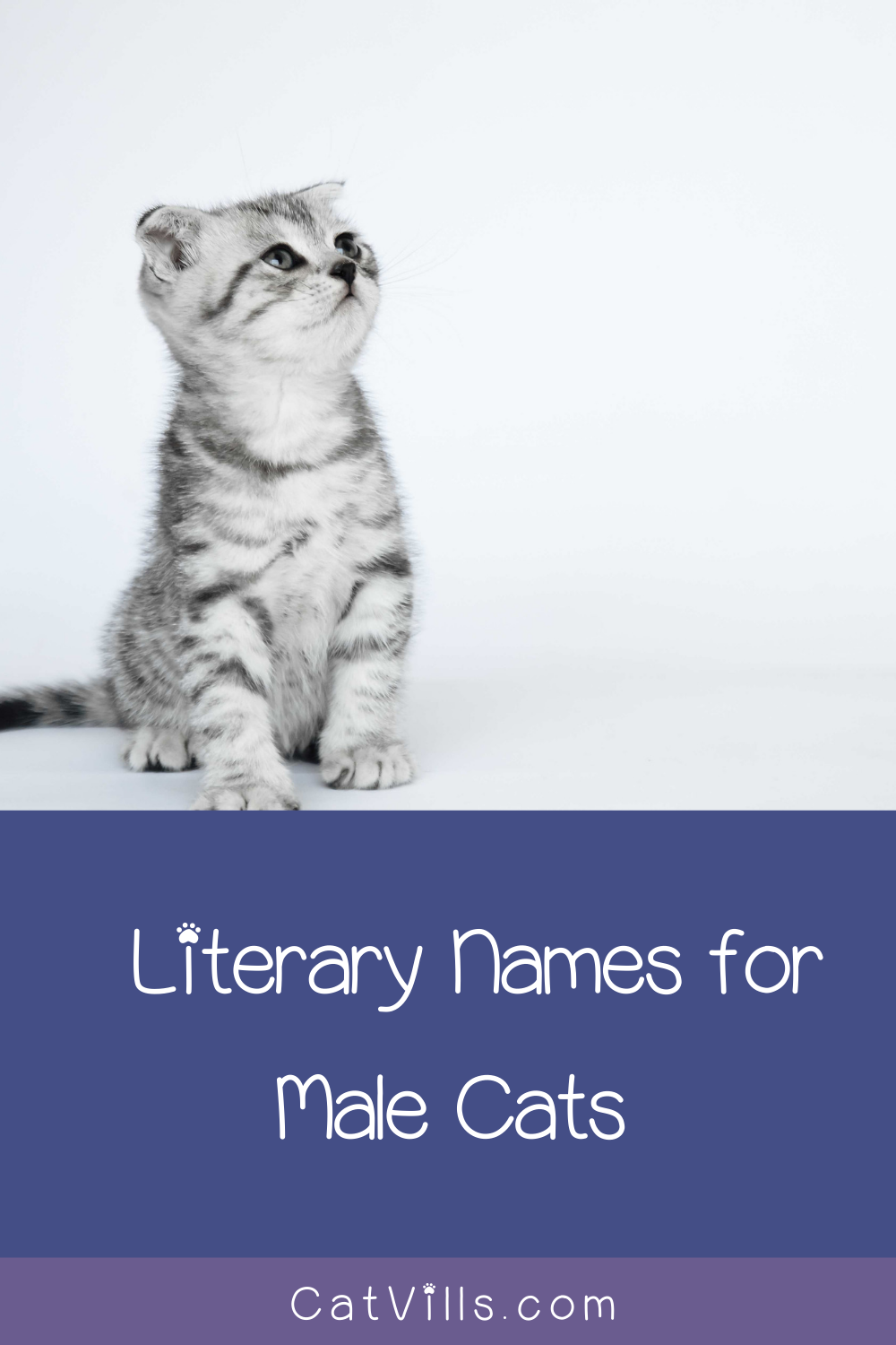 229 Brilliant Literary Names for Cats Literary names