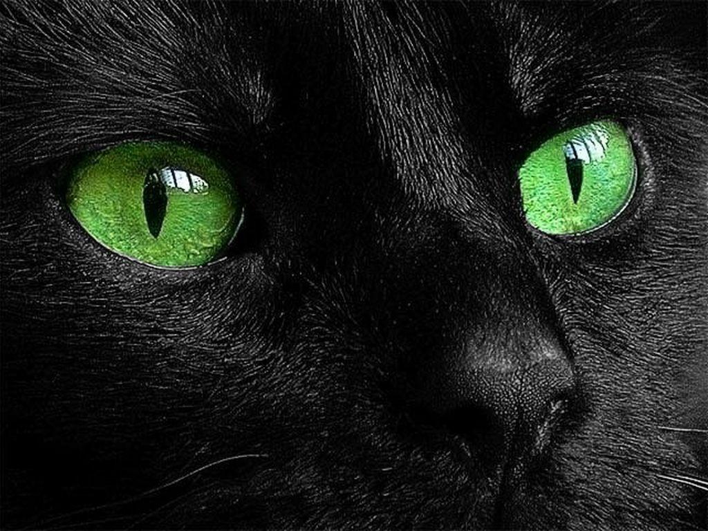 Black cat ~ Green eyes   Cat Eyes   Pinterest