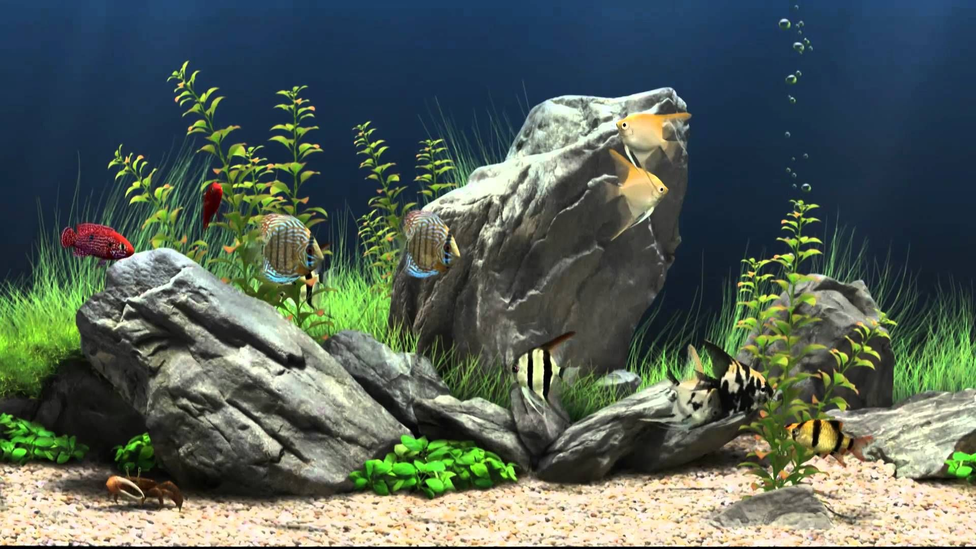 Freshwater aquarium no fish - Dream Aquarium Virtual Fishtank Who Says You Can T Have An Aquarium In An Rv No Water Worries No Cleaning Required No Fish To Feed The Perfect Rv