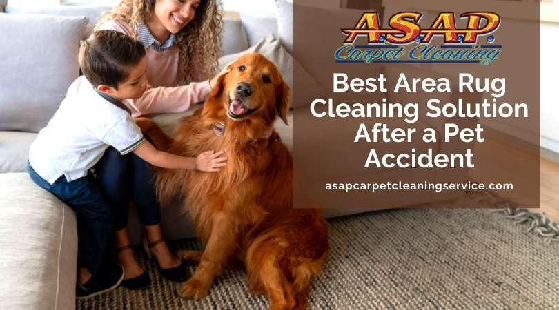 Having a pet at home is exciting. But chances are it will have a pee accident in your home.   This means long hours of area rug cleaning and eliminating the pet urine odor. Coming up next is the best area rug cleaning solution to help clean up those messes.  #rugcleaning #rugcleaners #rugcleaningservice #arearugcleaning
