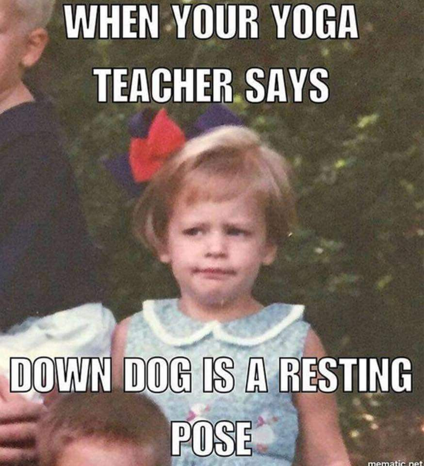 When Your Yoga Teacher Says Down Dog Is A Resting Pose Funny Yoga Memes Yoga Quotes Funny Yoga Meme