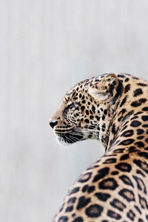pretty kitty | Big Cats | Pinterest | Arquitectura, Estilo y Animales