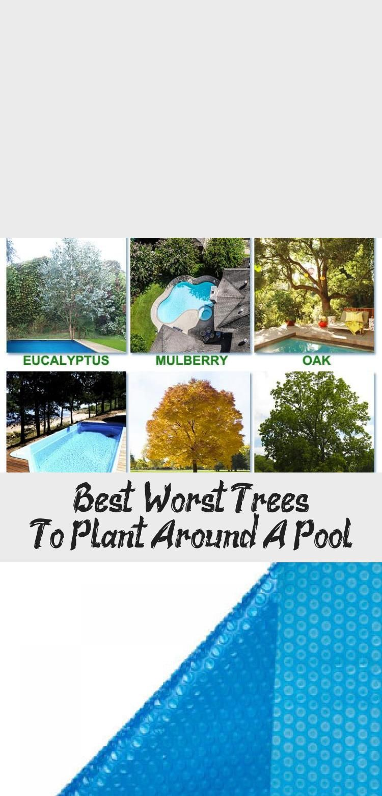 Best Worst Trees To Plant Around A Pool In 2020 Trees To Plant
