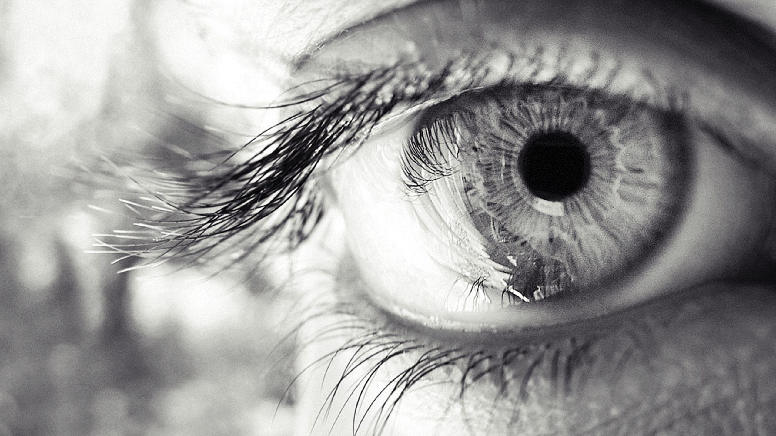 The Human Eye Can See 500 Shades Of Gray Eyefacts