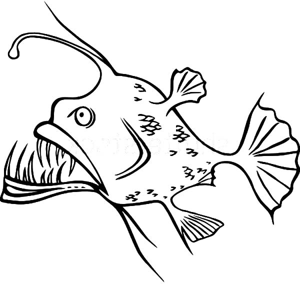 Angler Fish Sharp Teeth Coloring Pages Best Place To Color Angler Fish Fish Drawings Fish Coloring Page