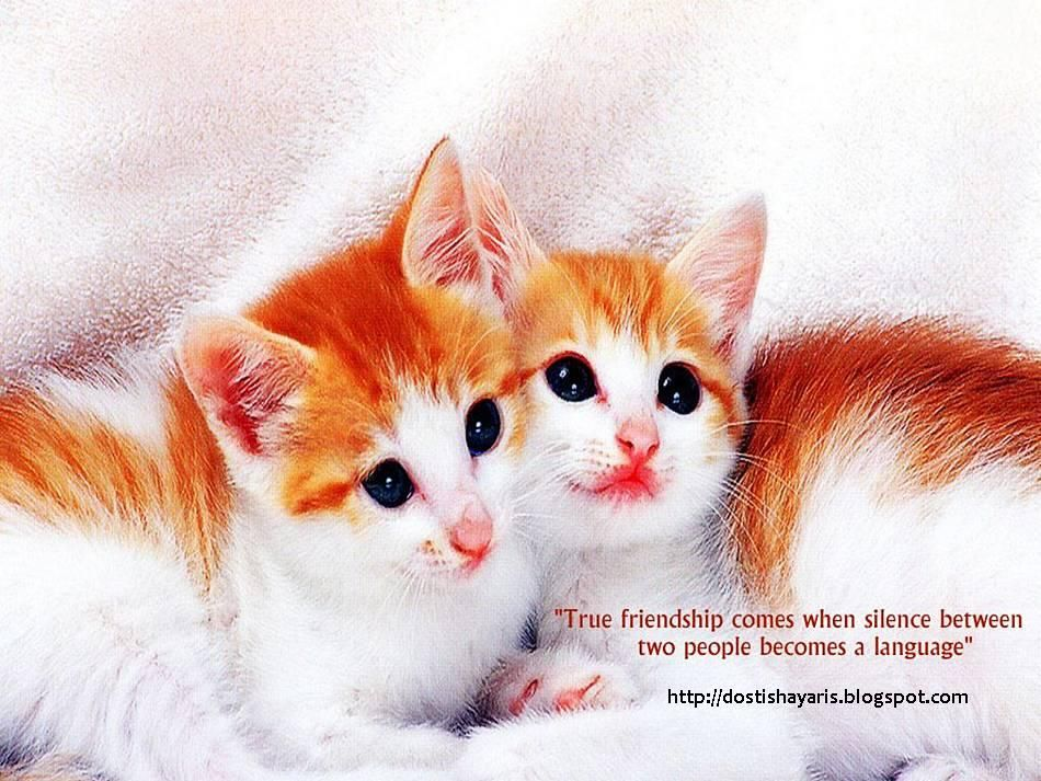 Image Of Friendship HD Images Friendship Collection Wallpapers