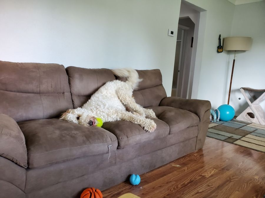 how to get smell out of couch from puke