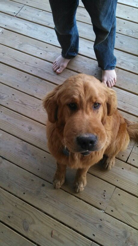 This Is My Dog Copper He Chases And Eats Butterfly S All The Time