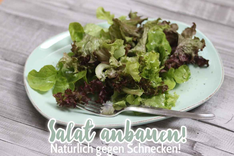 Marvelous Schnecken nat rlich bek mpfen Salat aus dem Garten im Salat Turm Anleitung