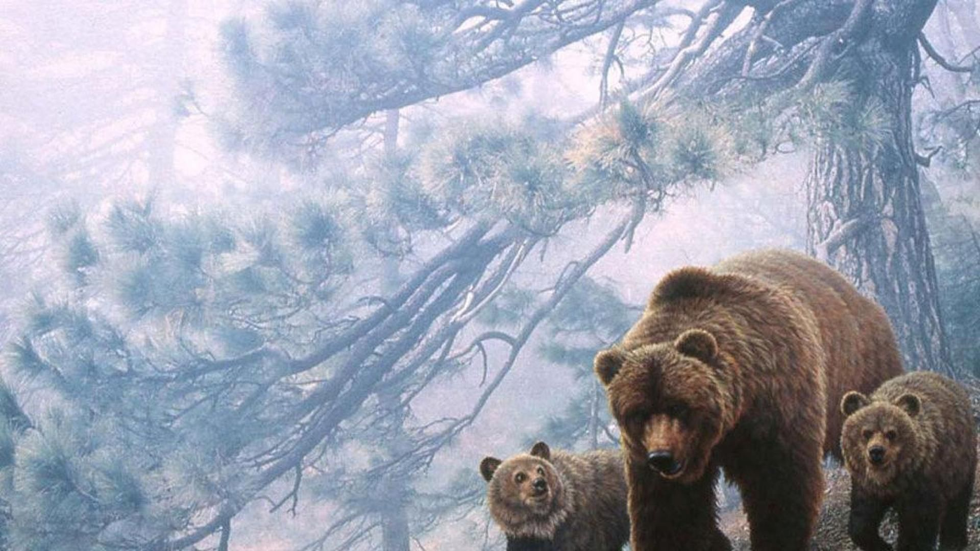 grizzly bear wallpaper | ahsan | pinterest | bear wallpaper
